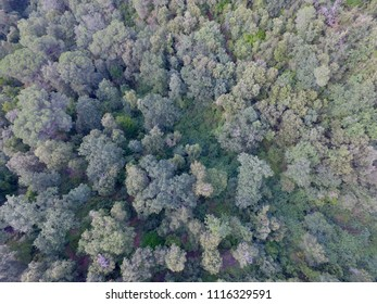 Photografy aerial Drone background forest tree ,spain