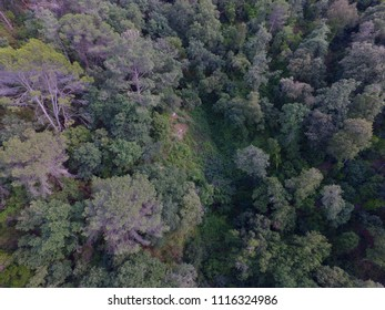 Photografy at Drone forest sumergido  background in catalonia ,Spain cenital image