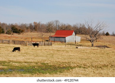 A photograph of a barn and cows in a Oklahoma field.