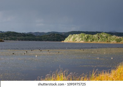 Photograph of a biosphere, Menorca natural park, Spain, with birds inside with sunlight coming out of the clouds.
