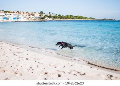 Photograph of a black dog running along a beach in a village in Menorca