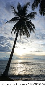Photograph of a coconut tree silhouette in a beach, focus on the leaf.