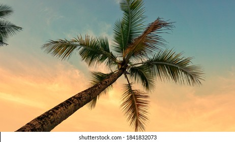 Photograph of coconut tree. Coconut trees are plants that generally grow around the coast. This photo was taken in Mamuju, West Sulawesi, Indonesia on October 25, 2020.