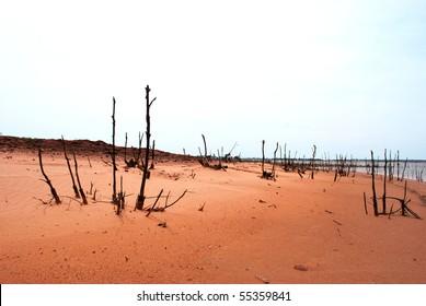 A photograph of dead trees on a sandy beach shoreline.