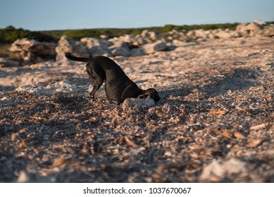 Photograph of a dog playing with a stick between some seaweed on the coast of Menorca.