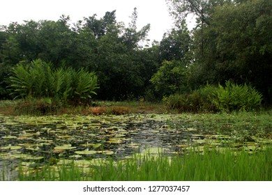 A photograph of an expansive and lush wetland habitat in southern Taiwan where birds migrate to.