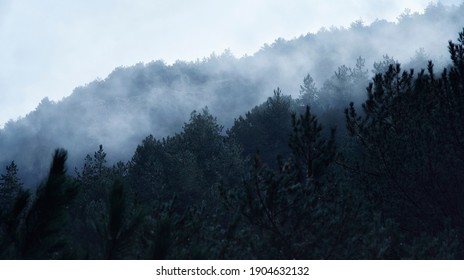 Photograph of fog breaking through forest trees in the Sierra Nevada mountains, Granada.