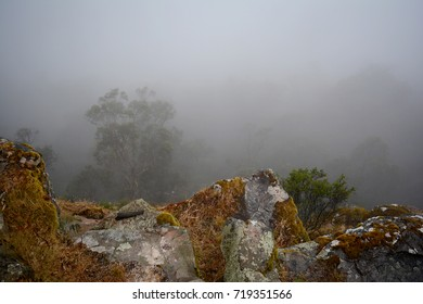 Photograph of a foggy morning in the Australian bush looking over a ridge