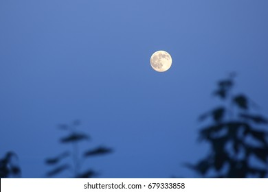 Photograph of the full moon at dawn, Moon rising over landscape with blue light and trees