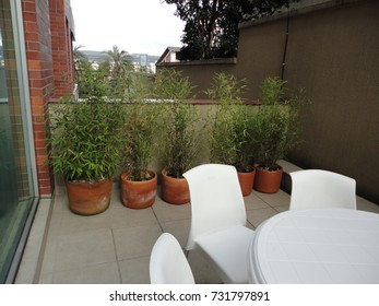photograph of house home deck yard with bamboo plants and white plastic chairs and table