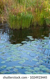 Photograph of lily pond in Volo Bog Illinois Nature Preserve.