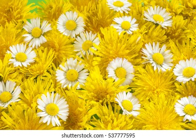 photograph mixture of daisies and  dandilions