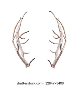 Photograph of pair of reindeer antlers extracted and isolated on white for compositing