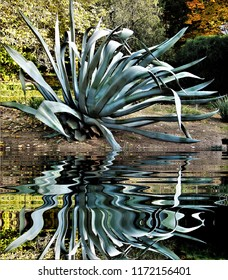 photograph of the pita plant reflected in the water,peace, harmony, tranquility, serenity, meditation, transcendence, relaxation,