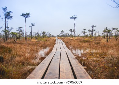 A photograph of a place called Dunika Swamp trail in Rucava county, Kurzeme region. This trail is also known as the largest marsh trail in Europe.