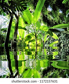 photograph of the plants reflected in the waterin the botanical garden,peace, harmony, tranquility, serenity, meditation, transcendence, relaxation, balance,