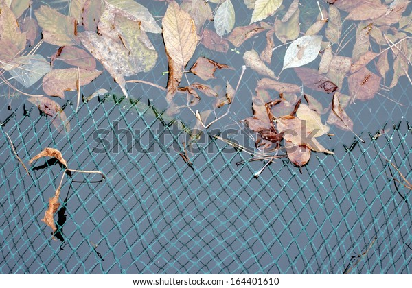 The photograph of a pond surface in autumn protected with a net / Pond net