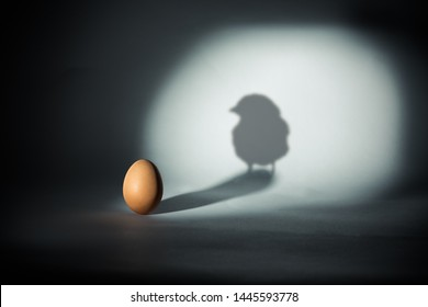 Photograph portraying the chick and egg paradox