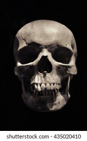 a photograph of a skull