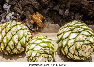 Photograph of some agave hearts from Oaxaca Mexico