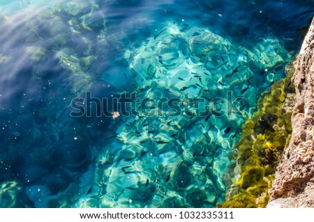 Photograph of some fish in the crystal clear waters of Menorca.