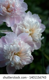 photograph of spring flowers for commercial uses