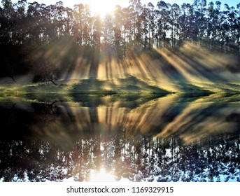 photograph of a sunrise in a eucalyptus forest reflected in the lake, with sunbeams in the morning mist, Galicia, Spain, mystic, spiritual, divine, transcendental, emotion, sensation, love, fog,