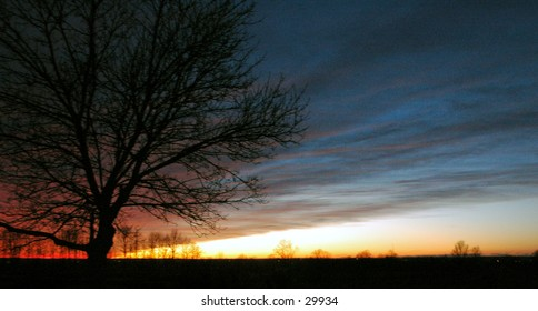 Photograph of the sunset.  The horizon is straight, with the leafless tree to the left of the photo as well as the angle of the sunset and light!