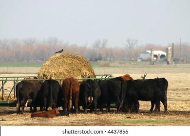 A photograph taken in Oklahoma.