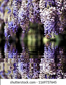 photograph of wisteria flowers reflected in the water,peace, harmony, tranquility, serenity, meditation, transcendence, relaxation, balance,