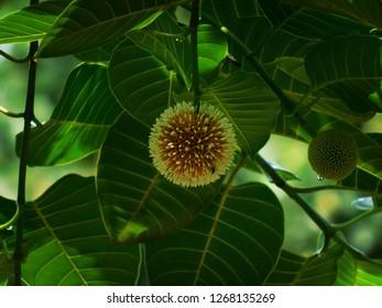 Photographar sachin Shandilya Beautiful flower is Long tree