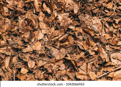 Photographed in the autumn park. Colorful autumn fallen leaves on brown forest soil background. Dry leaves background,Dried leaves.