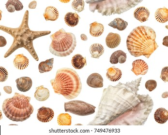 Photographed sea shells, snails and a starfish on a white background. Seamless image to be repeated endlessly.