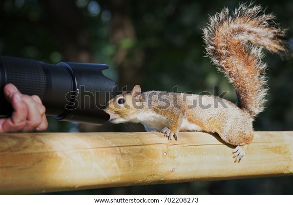 a photographer and a curious squirrel