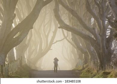 Photographer at the Dark Hedges, Northern Ireland