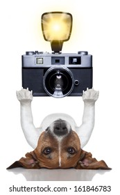 photographer dog taking a picture with a camera and flashing