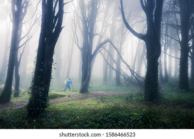 Photographer in the green foggy forest. Summer woodland landscape
