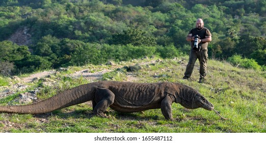 Photographer and  Komodo dragon in Komodo National Park.  The Komodo dragon, scientific name: Varanus komodoensis. Natural habitat. Indonesia. Rinca Island.