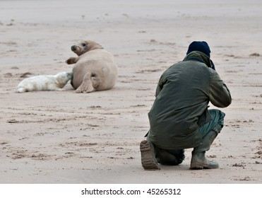 Photographer with seals