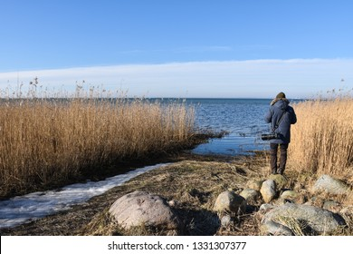 Photographer in spring season by the reeds at the coast of the swedish island Oland