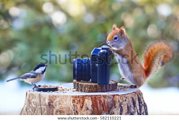 Photographer squirrel and model chickadee.