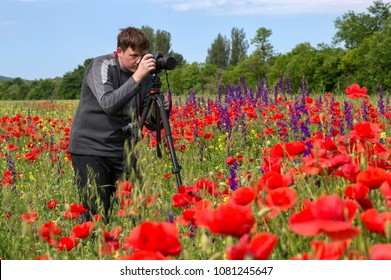 photographer takes a picture of a field of red poppies