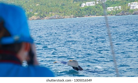 Photographer taking picture of tail fin of Humpback whale, Samana bay, Dominican Republic, 15 th January 2018