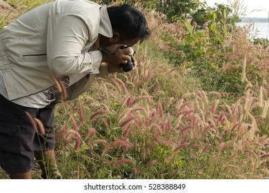 Photographers is shooting photo of pink grass flowers.
