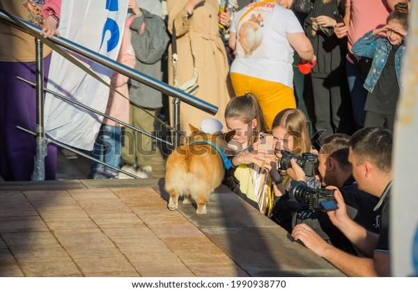 photographers-shooting-red-corgi-dog-600