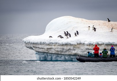 Photographers take pictures of adele penguins on floating iceber