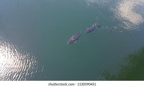 photographing fish underwater