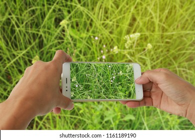 Photographing with smartphone in hand. Nature concept. Purple flower and green grass.