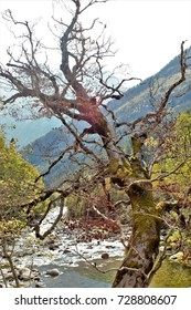 Photographs of the Bujaruelo Valley in Autumn in the Ordesa and Monte Lost National Park, Huesca, Aragon, Spain,