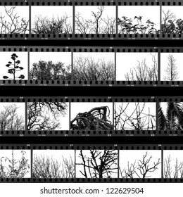 Photographs of trees and plants film proof sheet. Black and white.
